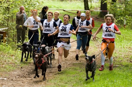 Může být pes přítelem běžce? Ano, třeba při canicrossu