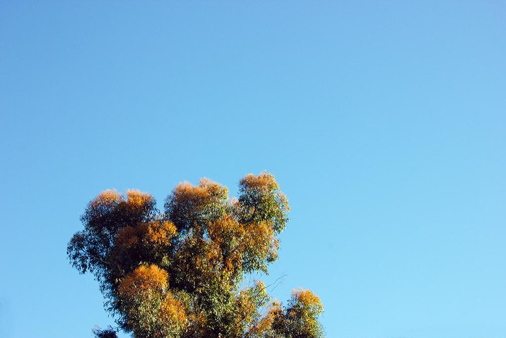 tree_2a_web