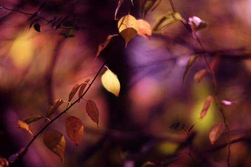 "_JIM7683 ===        ""OCTOBER"" autumn colors"
