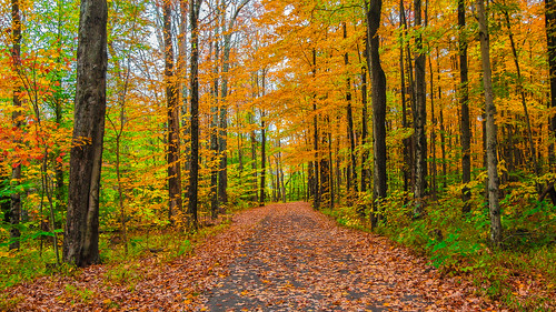 road trip autumn sky orange green fall colors beautiful bicycle yellow forest grey vermont path foliage jungle stowe