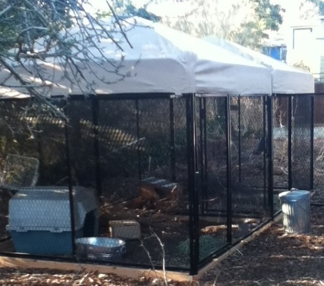 bunny palace // outdoor enclosure for rabbits