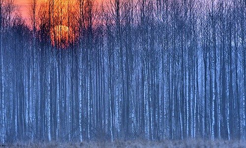 forest woods bluehour