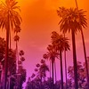 California dreamin' ✌️🌴 #90210 #losangeles #california by Diana Misa