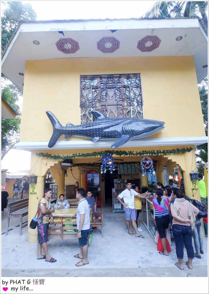 cebu whale shark 05-2