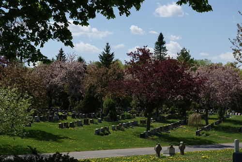 Blossoms in the Cemetery