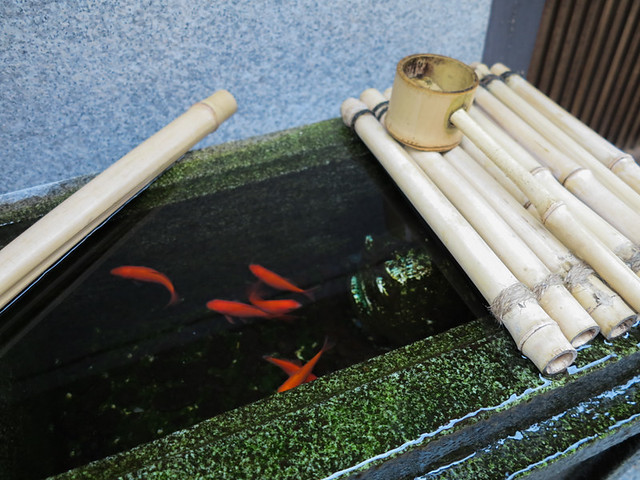 goldfish in gion.