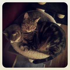 Of course we can both fit in here! #snuggles #MalandInara #catsofinstagram