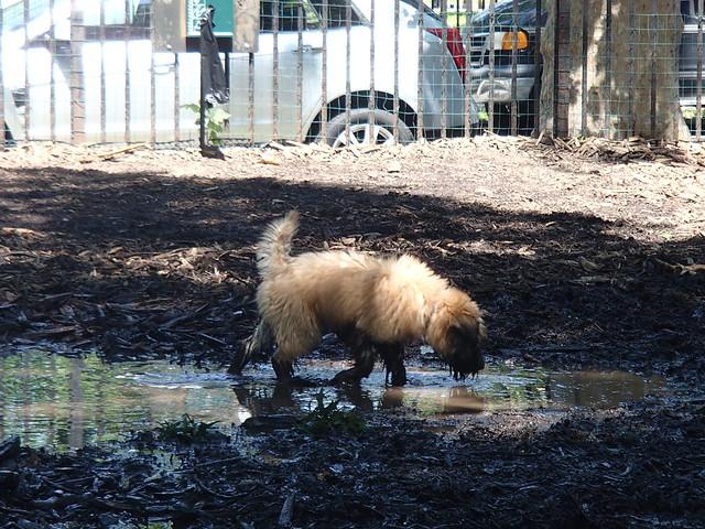 Dog Mud Run Uk