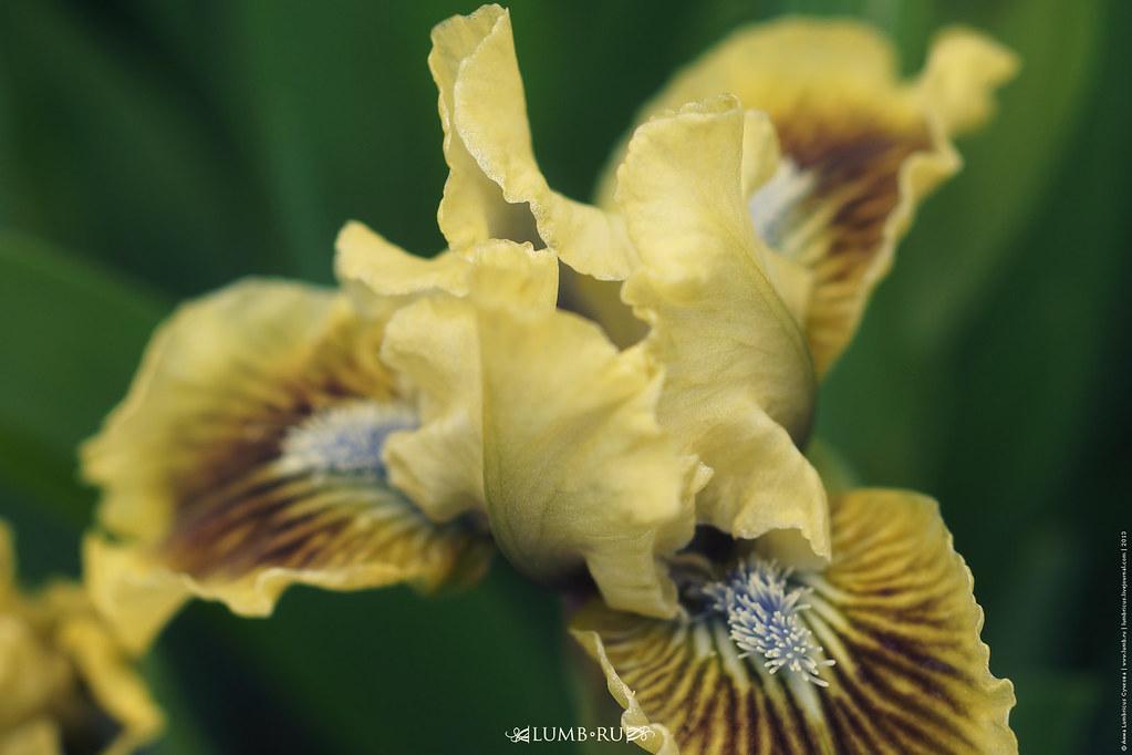 2013.04.20 Iris , Yalta