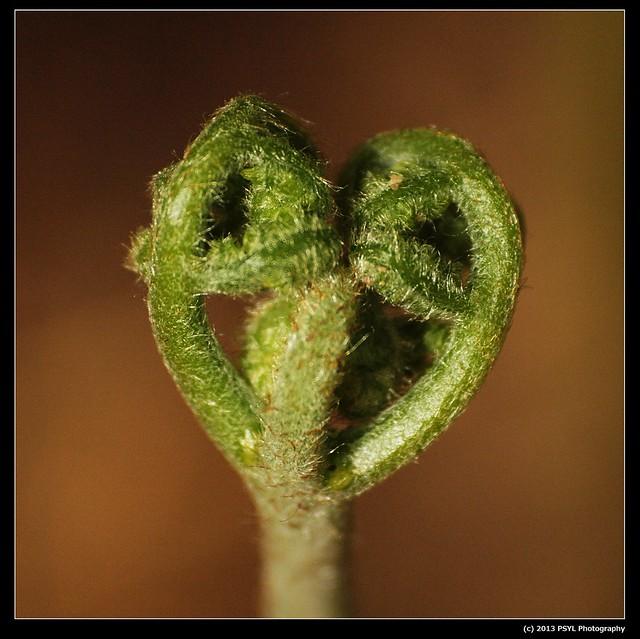 Love bud?