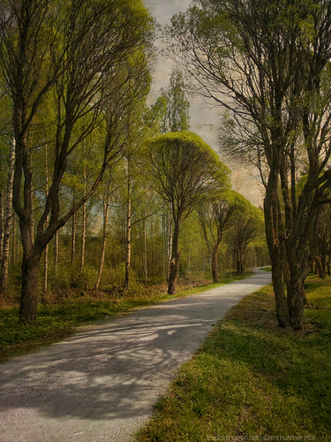 road park trees summer tree texture nature grass suomi finland landscape solitude quiet shadows peaceful bluesky nopeople birch curve jyväskylä gravel keskisuomi samsunggalaxys2