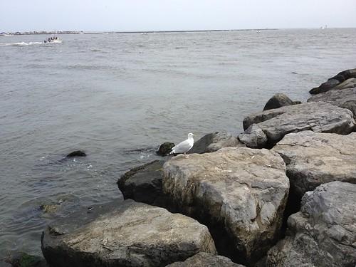 Long Beach Island-41