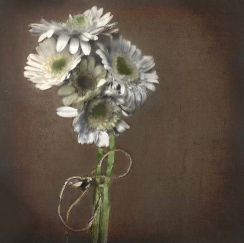 Still Life, Gerber Daisies (pinhole) by Crunchy Footsteps