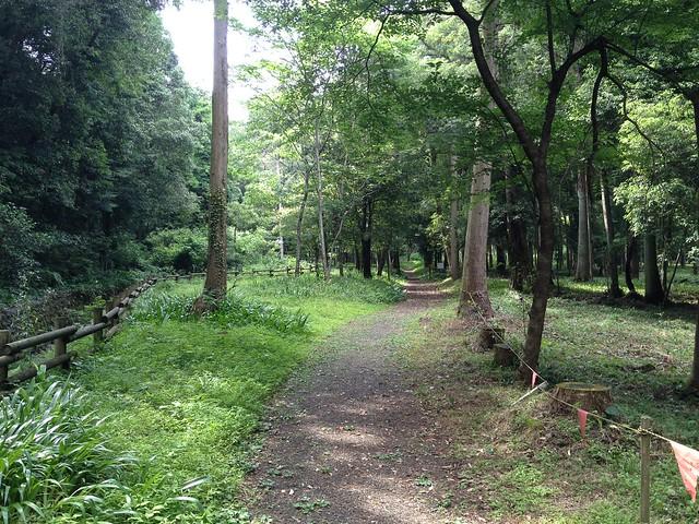 大谷山 森林浴コース