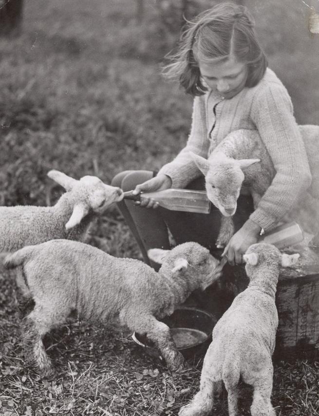 niña con corderos