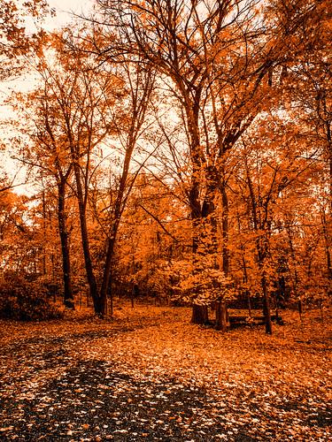 Autumn in Lafayette County