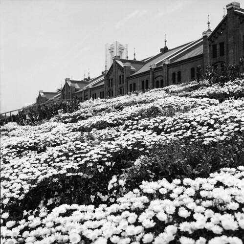 散策 [横浜赤レンガ倉庫] : ROLLEICORD Vb