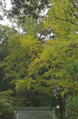 【写真】2013 紅葉 : 岩戸落葉神社/2020-11-23/IMGP3036