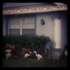 Solstice Lights, Magick Frogs and Garden Flamingos!