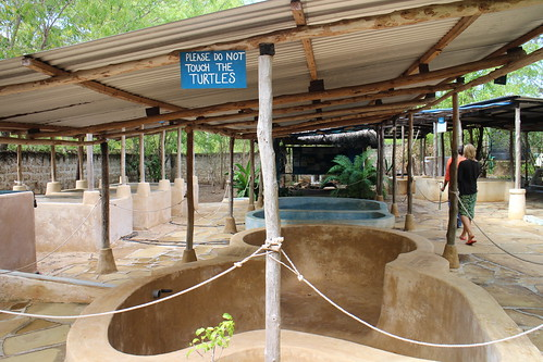 WTW的救傷復原中心,受傷的海龜就住在池子裡。(許惠婷攝。)
