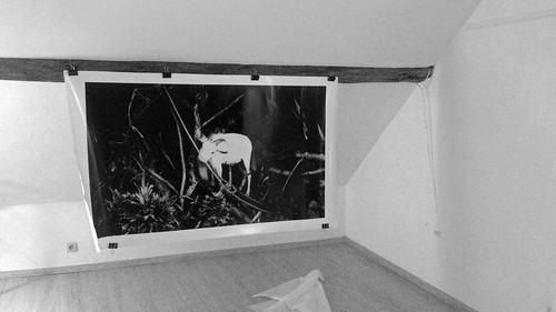 Youichi Shidomoto's picture in the top of Galerie Ephémère, Little Big Web, Thuinlace