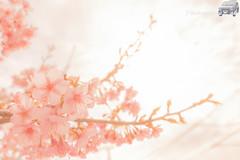 WEB-LR_20140304_0051-2.jpg