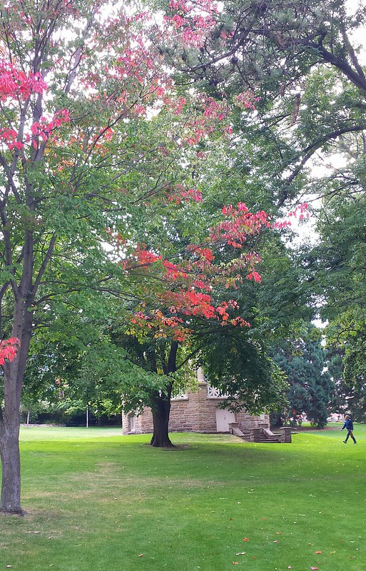 Early autumn colour?