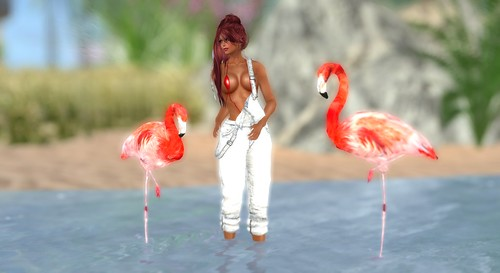 the flamingos :-)