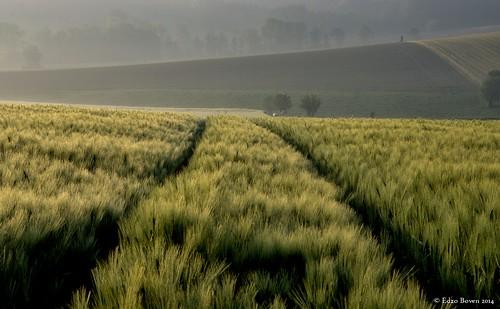 lines landscapes belgium belgië lijnen 2014 landschappen vlaamseardennen flemishardennes pentaxk3