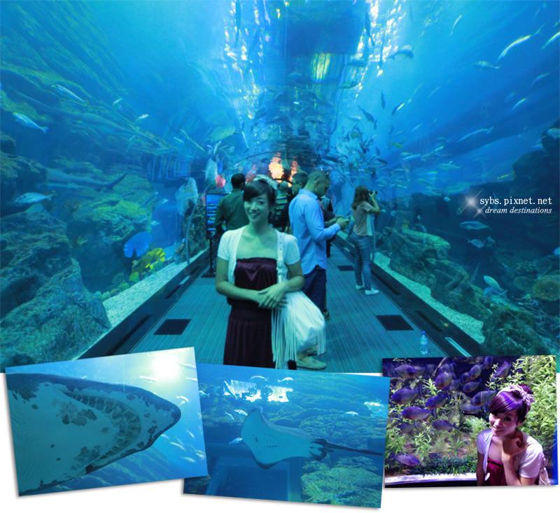Dubai mall, Dubai Aquarium & Underwater Zoo, 杜拜, 水族館, 杜拜購物中心, 旅行, 旅遊, 遊記