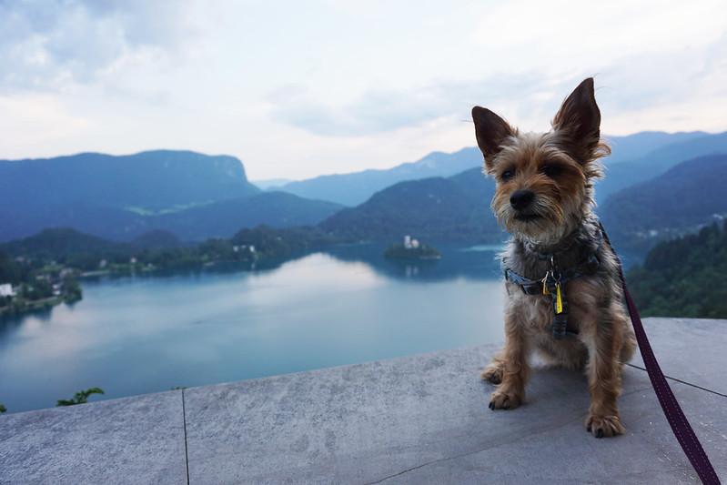 Luna at Bled