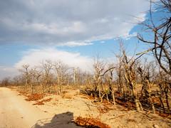 Hwange National Park-Sinamatella