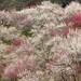 梅の園 2 by * Yumi *