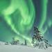 [ … Lapland ] by Raymó