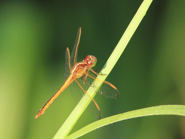 Dragonfly 20130519