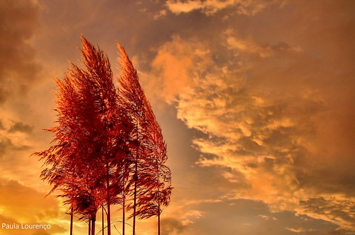 Plumes at sunset