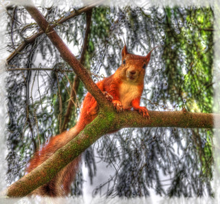Squirrel in Alexandrovsky Park, Pushkin. Белка  Александровском парке в Пушкине.