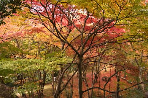 【写真】2012 紅葉 : 笠置山もみじ公園/2020-05-28/IMGP6125