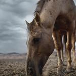 Horse #9119