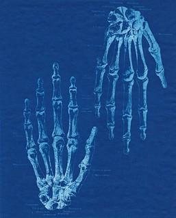 Hands, sun print, 8.5