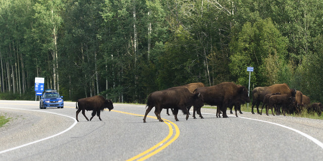 Canadian traffic jam