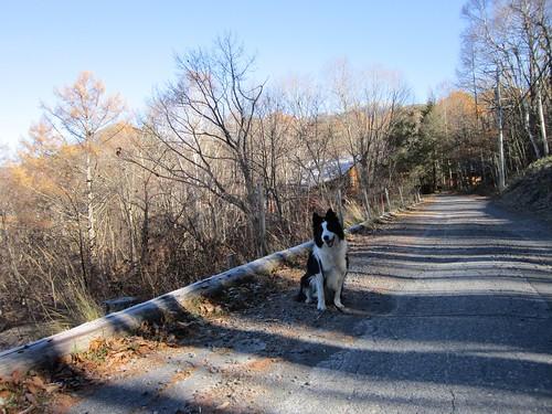 落葉した散歩道のランディ 2013年11月14日9:35 by Poran111