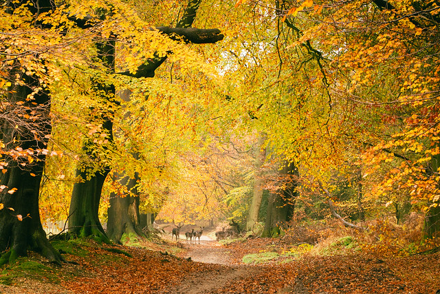 Autumn Colours, Ashridge Forest