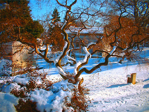 Tree in a cemetery in the winter glow