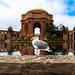Palace of Fine Arts & Seagull, San Francisco, California, USA by Tanzeus