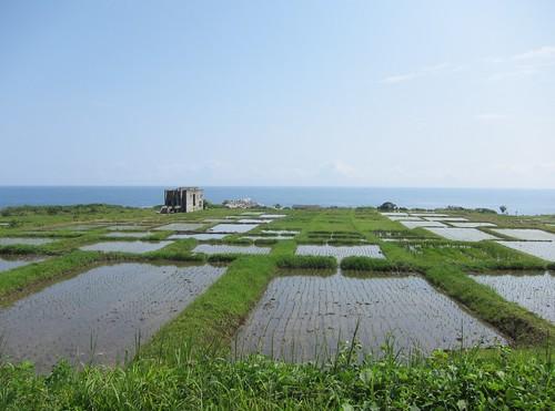 石梯的水田與大海交織成一片美景。