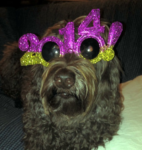 stella in her happy 2014 glasses