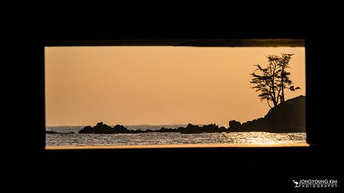 morning winter sea sun seascape tree silhouette sunrise asia earlymorning korea southkorea morningtwilight