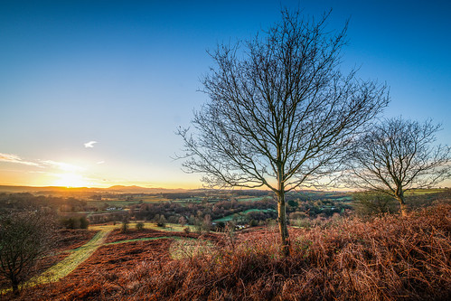 morning trees winter sunrise dawn january bringstycommon
