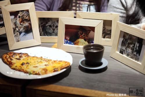 cat_5th (5)